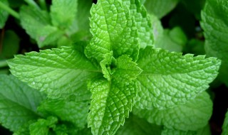 Mint-for-irregular-periods