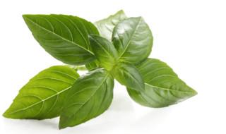 basil-for-headaches