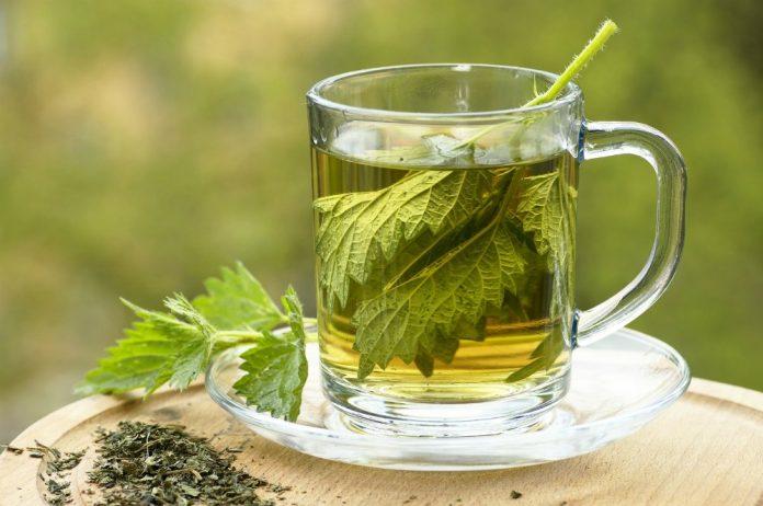 Health Benefits of Nettle Tea